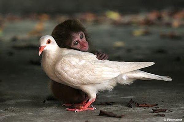 A une fleur poésie Chimpanze