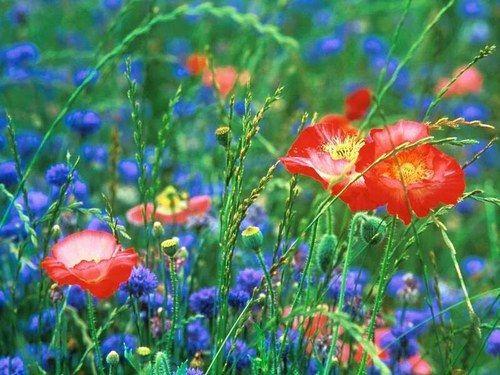 A une fleur poésie Fleurs-sauvages
