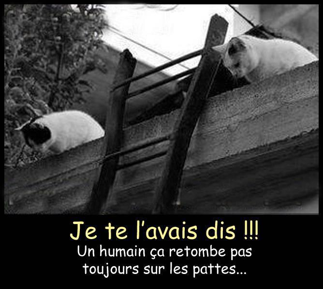 humour-chat-2