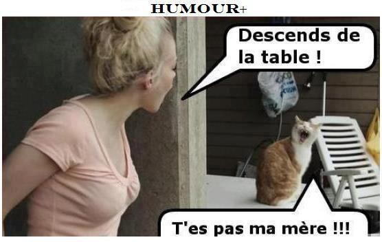 humour-chat
